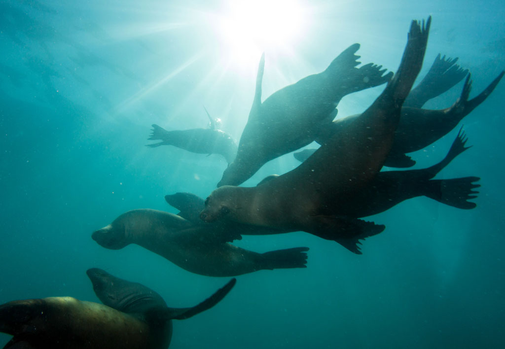 Did You Know? What's the Difference Between a Seal and a Sea Lion?