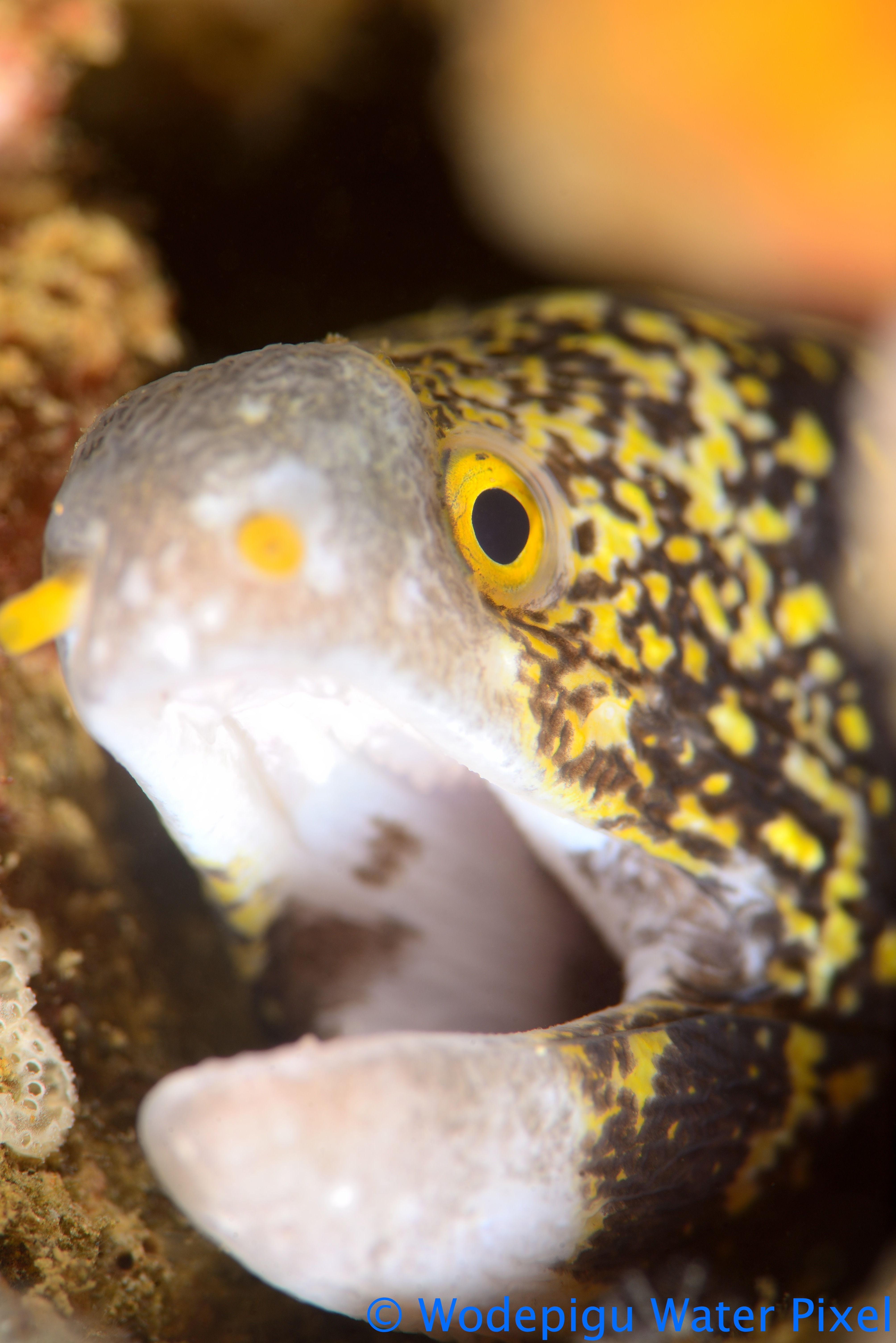 tips for underwater photography of moray eels in focus
