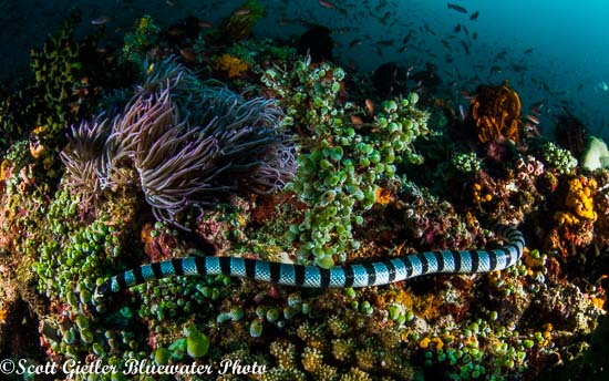 Panasonic 8mm fisheye lens underwater photography