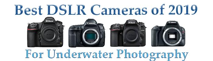 Top 2019 DSLR Camera for Underwater Photography and Videography