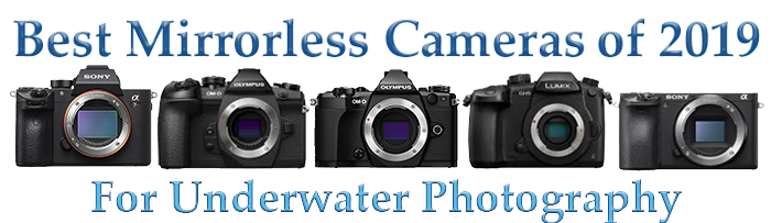 Top 2019 Mirrorless Camera for Underwater Photography and Videography