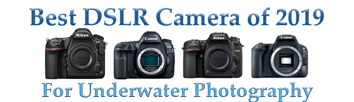 Best Dslr Choices 2019 Bluewater Photo Video