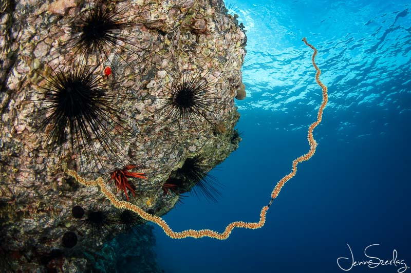 Wide shot of wire coral in Maui, Hawaii with D780, 8-15mm Fisheye Lens, f/11, 1/125, ISO 200 Photo by Jenna Szerlag