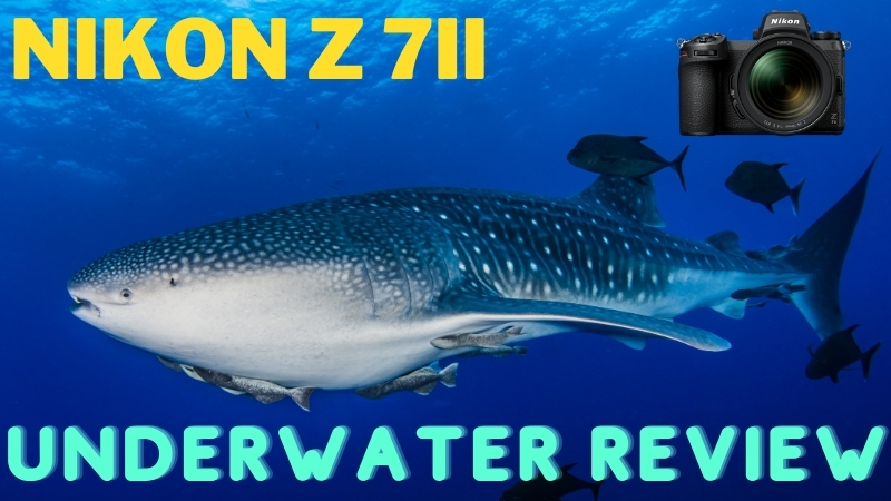 Nikon Z7II Underwater Review