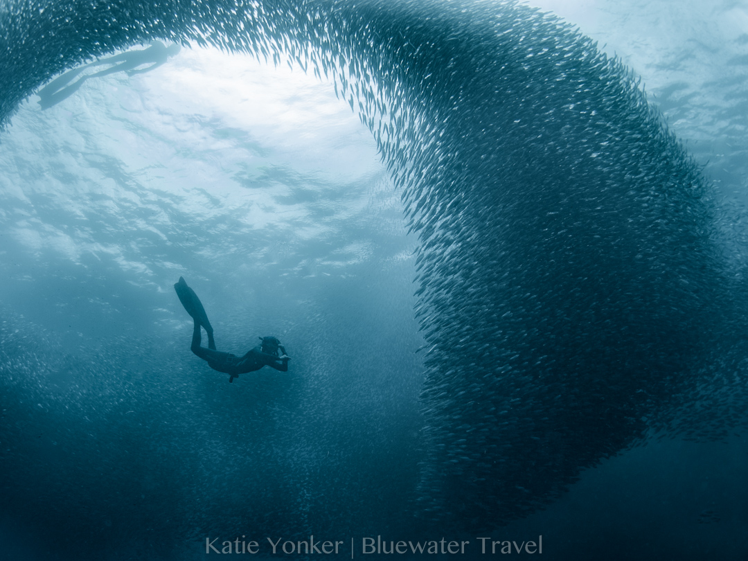 Best Diving in the Philippines - Top 9 - Bluewater Dive Travel
