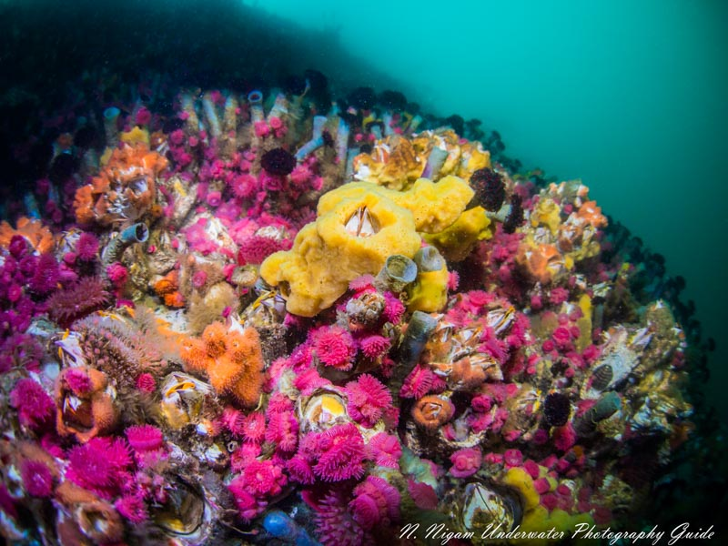 Pacific Northwest reef photographed with one Symbiosis SS-2R strobe