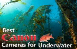 Best Canon Cameras for Underwater (2019)