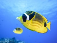 Nikon 16-35mm F4 lens review for underwater