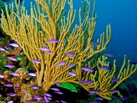 Liberty Wall – One of Haiti's Hidden Diver Havens and Extraordinary Dive Site