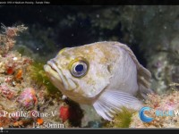 Nauticam GH4 underwater video footage & settings