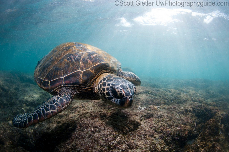 Turtle and sun rays