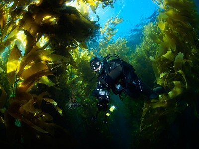 Floating through the Kelp Forest