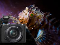 The Future of Underwater Photography