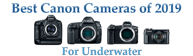 Best Canon Cameras for Underwater (2019) - Bluewater Photo