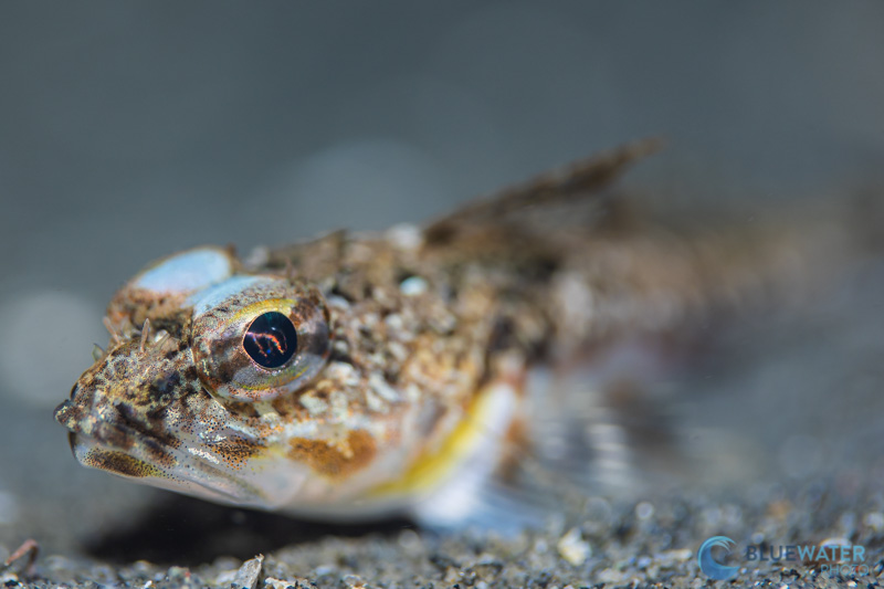 fish photographed with the canon eos r6