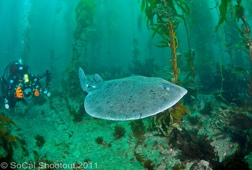southern california underwater photo shootout winners