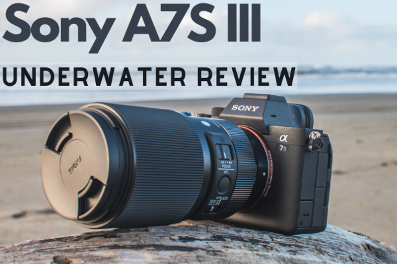 Sony A7S III Underwater Review