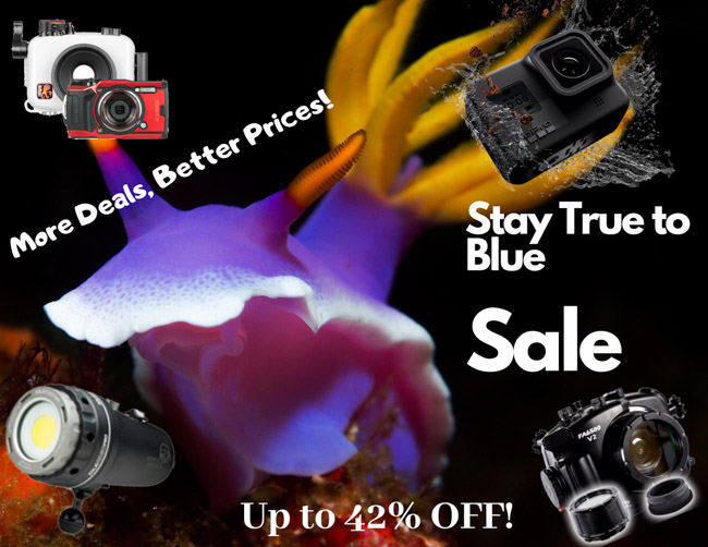 underwater photography gear sale