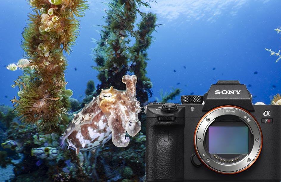 Sony A7R III Camera Review - Bluewater Photo