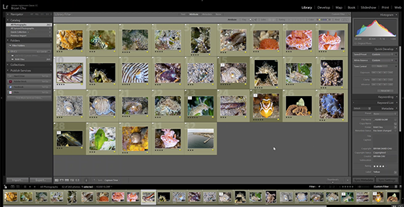 Lightroom Tutorial: Time-Saving Tips for Managing Photos