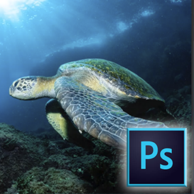 How to remove backscatter via Photoshop