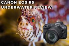 Canon EOS R5 Underwater Review