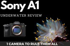 Sony A1 Underwater Review