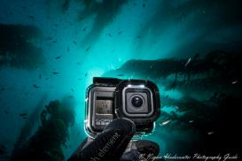 GoPro Hero 8 Underwater Video