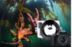 Canon SL3 Underwater Review