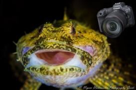 Canon EOS R5: A Deep Dive into Underwater Image Quality