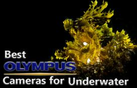 Best Olympus Cameras for Underwater (2019)