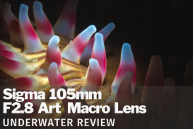 Sigma 105mm f/2.8 DG DN Art Macro Lens Review