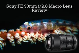 sony 90mm macro lens underwater review