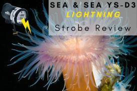 Sea & Sea YS-D3 underwater strobe review