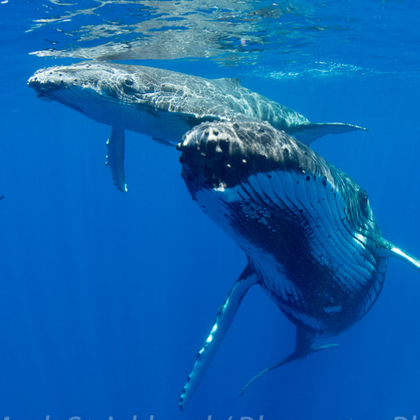 Underwater Photography Workshops & Trips - Bluewater Photo