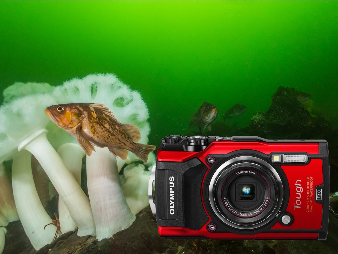 Olympus TG-5 Camera Review
